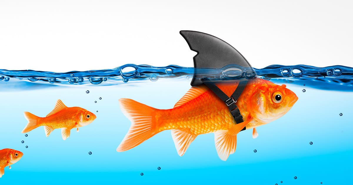 Small Brave Goldfish With Shark Fin Costume Leading Others  - Le